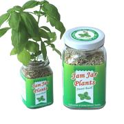 【Light+】Jam Jar Plants小植栽-甜羅勒