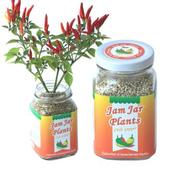 【Light+Bio】Jam Jar Plants小植栽-五彩辣椒