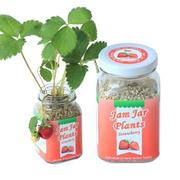【Light+Bio】Jam Jar Plants小植栽-迷你草莓