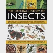 The Natural History of Insects: A guide to the world of arthropods, covering many insect orders, including beetles, flies, stick