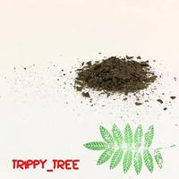 """TRIPPY_TREE"" 墨西哥濃縮鼠尾草 Salvia divinorum -Extract-"